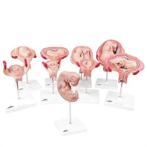 A3BS Delux Pregnancy nine Series Model